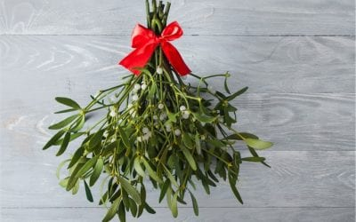 Meet the herb: Mistletoe