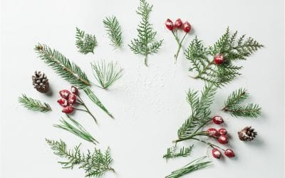 10 natural essentials you need to survive the silly season