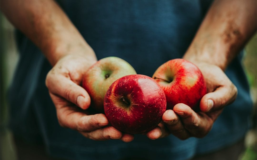 Apples – a digestive superfood