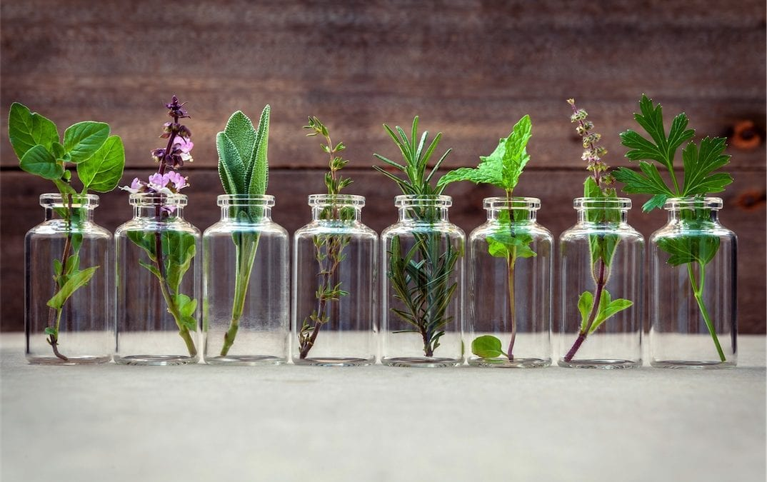 row of kitchen herbs in bottles