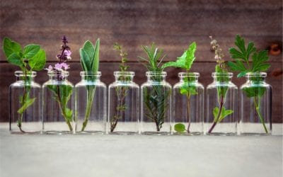 Kitchen herbs for viral infections